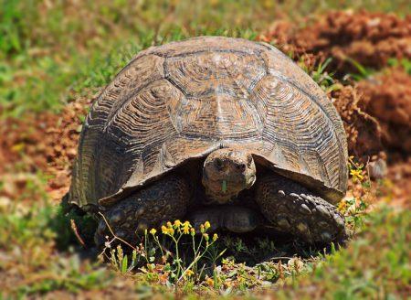 turtle-1234015_640